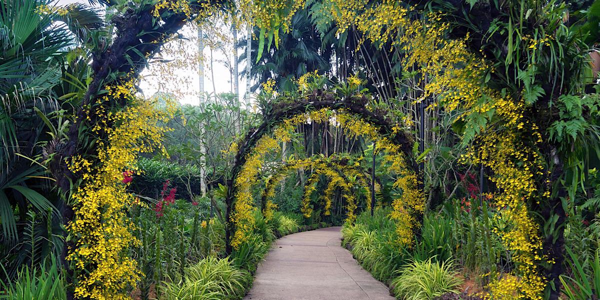 シンガポール植物園(ボタニック・ガーデン)って何?